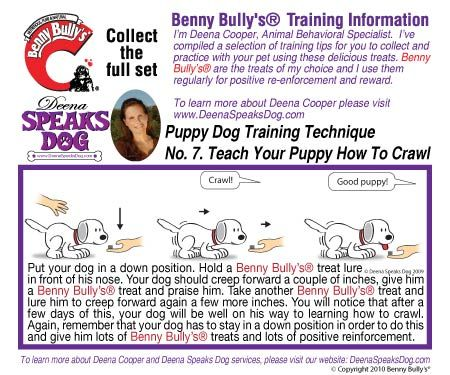 Deena Speaks Dog Benny Bullys Instruction Booklet - Dog Number 7 - Teach your Puppy How to Crawl
